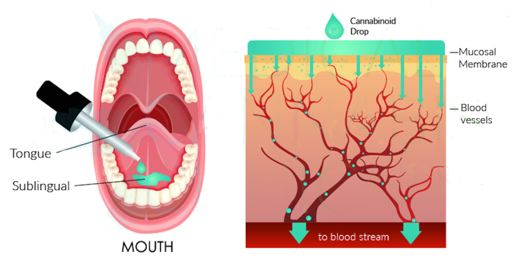sublingual-delivery-of-cbd